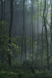 forest-2203341_1920